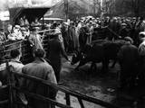 Maidstone Cattle Market Photographic Print