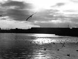 Seagulls a the Docks Photographic Print