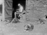 Farmyard Dogs Photographic Print