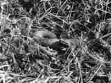 A Snake in the Grass Photographic Print