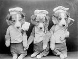 Dogs as Chefs Photographic Print