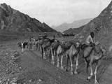 Camel Caravan Photographic Print