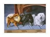 Pomeranians, Maltese Terrier Giclee Print