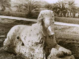 Egyptian Sphinx Photographic Print