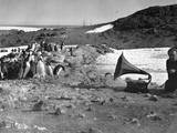 Penguins and Gramophone Photographic Print