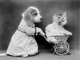 Pushing Kitten Along Photographic Print