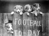 Dog Football Fans Photographic Print