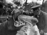 Hippo's Dental Check Fotografisk tryk
