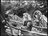 Touring Monkeys Photographic Print