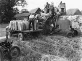 Loading Threshed Barley Photographic Print
