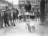 Dog on Stilts! Photographic Print