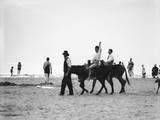 Donkeys at Weston Photographic Print
