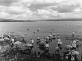 The Great Swannery Photographic Print