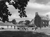 Norfolk Farmhouse Photographic Print