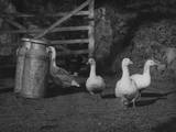 Geese and Milk Churns Photographic Print