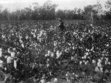 Cotton Fields Photographic Print