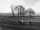 Spring Ploughing 1938 Photographic Print