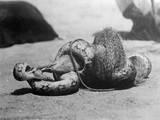 Snake Killing a Mongoose Photographic Print