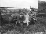 Milking a Goat Fotografisk tryk