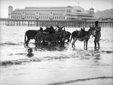 Donkeys in Sea Photographic Print