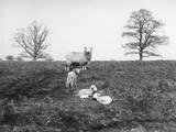 The Lambing Season Photographic Print