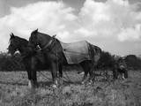 Ploughman's Lunch Photographic Print