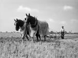 Horse Plough Photographic Print