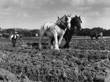 Horse Plough Photographic Print