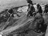 Salmon in Nets Photographic Print