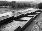 Salmon Fish Ladder Photographic Print