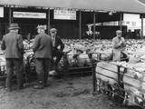 Kidderminster Sheep Fair Photographic Print