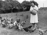 Feeding Hens Photographic Print