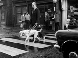 Blind Man with Guide Dog Crossing the Road Photographic Print
