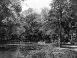 Wanstead Park Woods Photographic Print