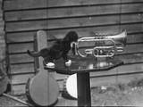 Kitten Trumpeter Photographic Print