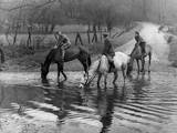 Horses Drinking Photographic Print