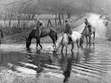 Horses at a Ford Photographic Print