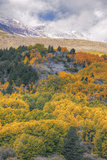 Autumn Color at Rush Creek Eastern Sierras Photographic Print by Vincent James