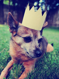 A Cute Chihuahua with a Crown Laying on Green Grass Toned a Retro Vintage Instagram Filter Posters by  graphicphoto