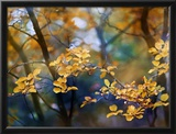 Autumn Leaves Framed Photographic Print by Ursula Abresch