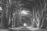 Afternoon Light Cypress Tree Road Point Reyes Photographic Print by Vincent James