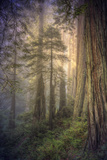 Within the Del Norte Coast Redwoods California Photographic Print by Vincent James