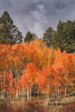 Autumn Color in Dixie National Forest Utah Photographic Print by Vincent James