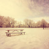 A Scenic Cold Winter Landscape with Snow and Trees Toned with an Instagram like Warm Filter Posters by  graphicphoto