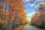 Autumn Trees and Scenic Road Maine Photographic Print by Vincent James