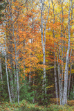 Fall Colors on Maine Coast Photographic Print by Vincent James