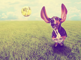 A Cute Basset Hound Chasing a Tennis Ball in a Park or Yard on the Grass Done with a Retro Vintage Print by  graphicphoto