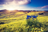 Magic Flowers in Mountain Landscape with Dramatic Overcast Sky. Carpathian, Ukraine, Europe. Beauty Photographic Print by Leonid Tit