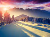 Fantastic Evening Landscape in a Colorful Sunlight. Dramatic Wintry Scene. National Park Carpathian Photographic Print by Leonid Tit