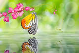 Painted Jezebel Butterfly Photographic Print by  teptong